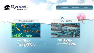 Web Design Brasov Dynavit