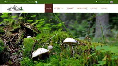 Web Design Brasov Vila Balea